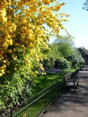 P1030861 Kensington gardens avril 2010.jpg
