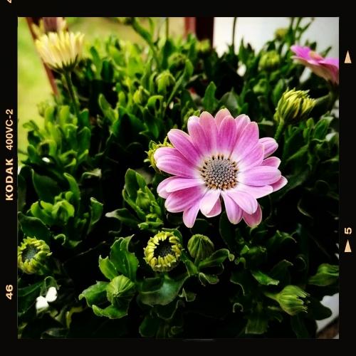 photos,photographie,photographies,pics,pictures,fleurs,actu,actualité