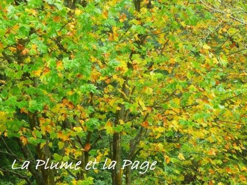 photographies, saisons, automne, actu, actualité