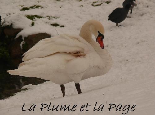 P1100941 La plume TEXT OR juil 2012.jpg