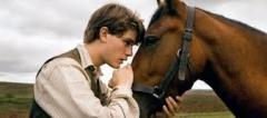 films,cinéma,steven spielberg,cheval de guerre,actu,actualité