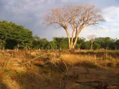 photographies, zambie, afrique, savane, actu, actualité
