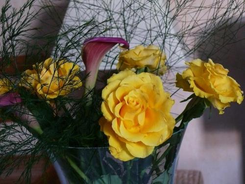 P1100576 Roses jaunes.jpg