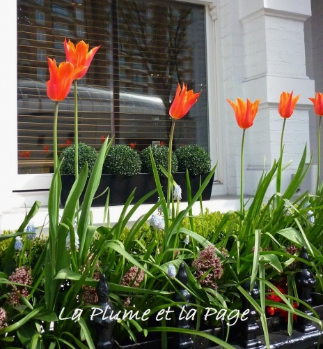 P1030533 Tulipes londres La Plume.jpg