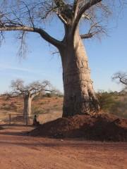 photographies, zambie, siavonga, kariba lake, afrique, actu, actualité